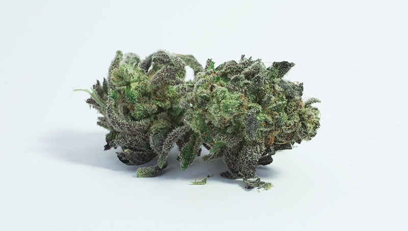 Girlscout cookie bud
